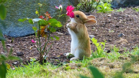 The smell of easter - cute, flower, spring, rabbit