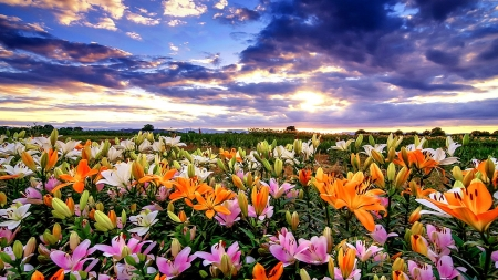 Wildflowers - colors, blossoms, sky, meadow, clouds