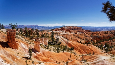 The fantastic color of Bryce Canyon National Park - trees, usa, landscape, utah, rocks, sky