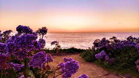 Sunset - San Diego, CA - usa, blossoms, colors, pacific, sky, coast, sea