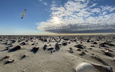 Dunes in Germany - beach, seashells, sand, dunes, gull, clouds, Germany