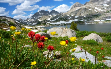 Wildflowers at the lake - rocks, stones, mountains, flowers, spring, clouds, sky