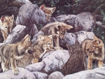 A Pack young Wolves