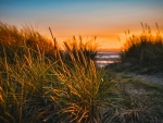 Some grass backdropped by a beach at sunset