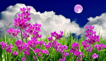 composition orchids under moon - art, design, moon, orchids