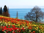 Spring at Mainau Island, Lake Bodensee