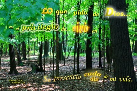 Lo Que Pido de Dios - forest, Bible, leaves, trees, inspirational