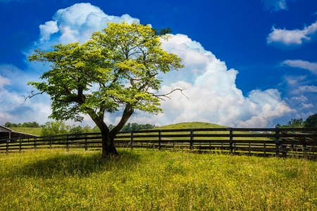 Springtime Afternoon - fence, tree, sky, landscape, clouds