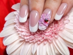 Gerbera and Fingernails