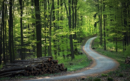 Forest Road - forest, trees, road, woods