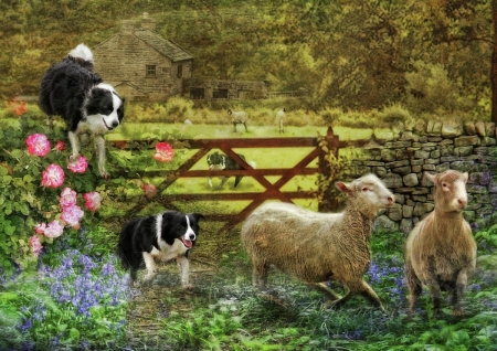 Catch Sheep - flowers, sheeps, catch, dogs