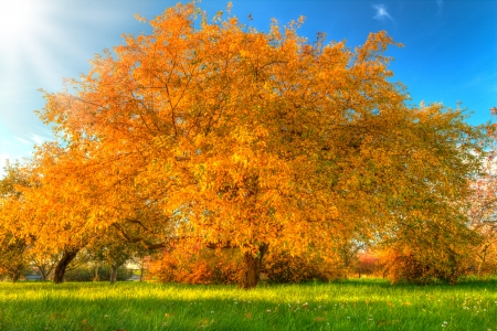 Autumn Tree - windows, desktop, wallpaper, Autumn Tree