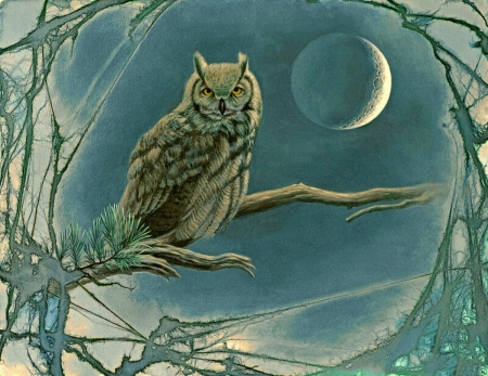 In the Night - owl, moon, bird, night