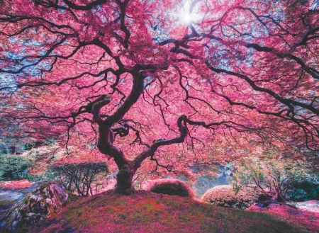 Pink Tree - digital, art, sun, landscape, spring