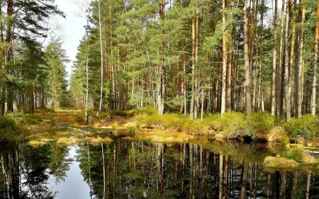 Forest Lake in Latvia - Latvia, forest, nature, lake