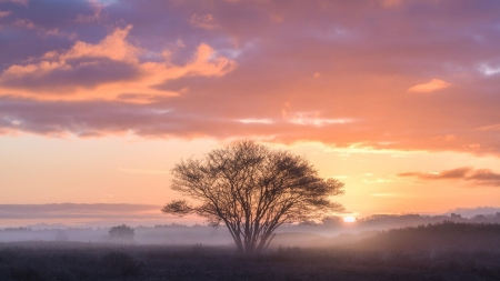 Morning in the Netherlands - sky, landscape, snrise, tree, colors, clouds