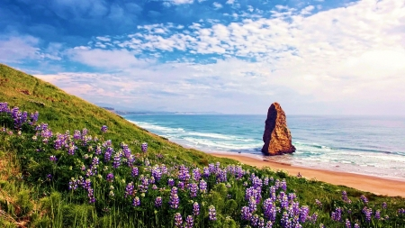 Pyramid Rock at Cape Blanco State Park, Oregon - clouds, sky, usa, beach, ocean, flowers