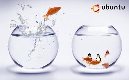 Linux-Ubuntu-GoldFish-Bowls - linux, pesciazzi, bowls, mac, penguins