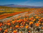 Antelope Valley, California