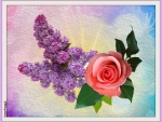LILACS AND ROSE