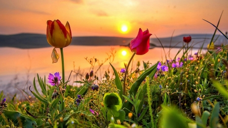 Sunset in Spring - reflection, water, colors, flowers, river, tulips, sky