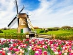 Windmill in Spring