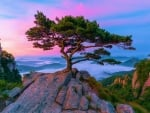 Pine Tree At Daedunsan, South Korea