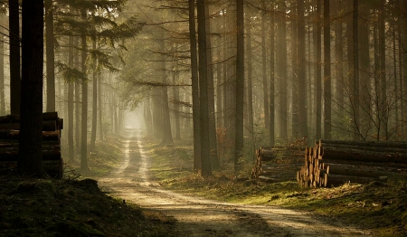 Along The Forest Path - Photo, rural, forest, Splender, pathway, browns, trees, Nature