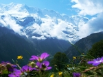 Swiss Alps Wildflowers With Snow-Capped Mountains