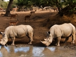 Rhinos and Antelopes