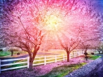 Light in the Cherry Trees