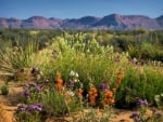 Desert Wildflowers of Utah in Spring