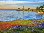 Spring Wildflowers of Lake Buchanan, near Llano, Texas
