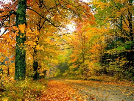 Autumn afternoon in forest - Road, Leaves, Fall, Trees, Forest