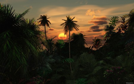 Tropical Destination - sun, sunset, palm trees, sunrise, tropical, nature