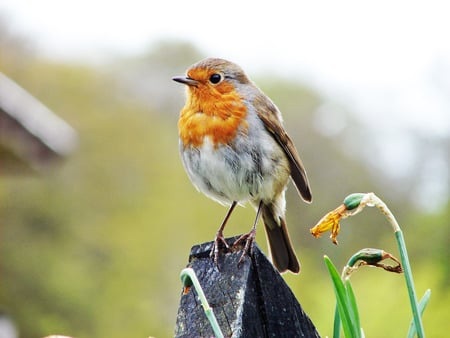 BIRD - birds, london