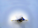 Angel in transonic flight