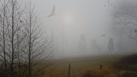 Morning Fog - widescreen, washington, eagle, firefox persona, trees, fog, mist, winter, morning, field
