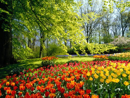 Kaukenhof Gardens Holland - flowers, holland, gardens, nature