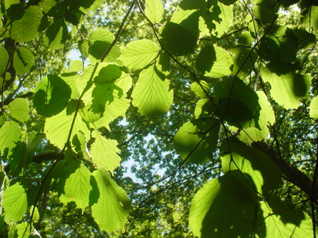 Leaves - green, light, trees, leaves
