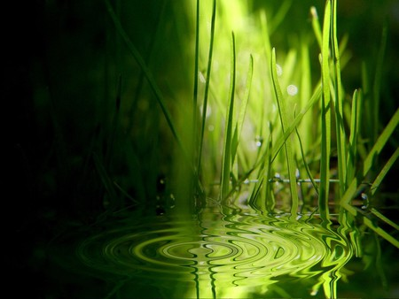 Grass Ripples - stunning, grass, water drop, water, green, ripples, nature, earth, imagery