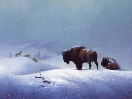 Native American buffalo - Other & Animals Background ...