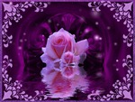 purplerose2.jpg