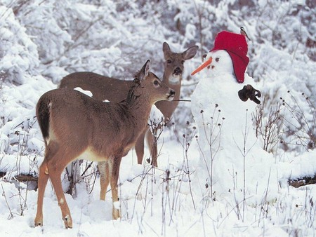 Deer On The Snowman Rehe Am Schneemann Deer Animals Background