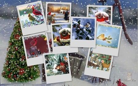 Snowbirds - snow, christmas, holiday, widescreen, winter, birds, xmas