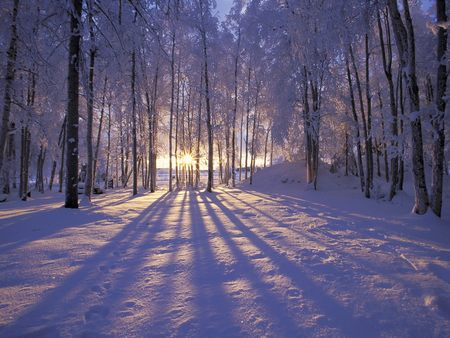 Winter sunset - forest, sunset, snow, cold, trees, shadows