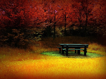 Fire autumn / Feuer Herbst - red, forest, widescreen, autumn, orange, bench, yellow, wds