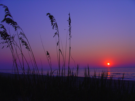 Myrtle Beach - sunrise, sunset, grass, ocean, sky, myrtle, beach