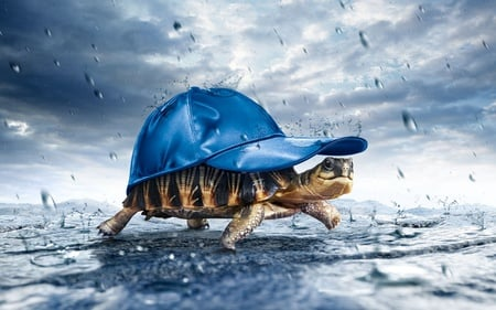 Walking in the rain - blue, sky, water, funny, nature, 3d, cute, animal, drops, clouds, hat, turtle