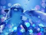 dolphinsj2.jpg